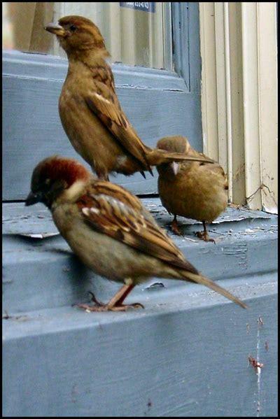 erik atwells blog       birds