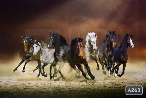 horse wallpaper hd  bagus animal wallpaper