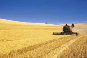 Washington Wheat Farming