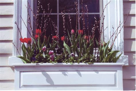 flowers  spring window boxes