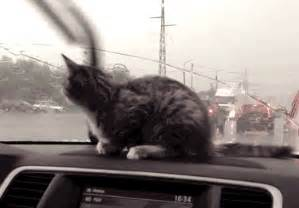 cats auto salvage what they don t tell you when cats and cars meet for the