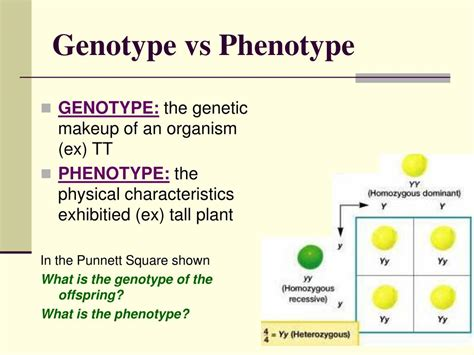 Chapter 11 Introduction To Genetics Powerpoint Presentation