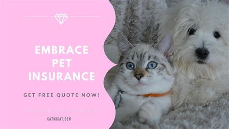There are many pet insurance companies out there, but i've narrowed it down to the top three insurance policies best for cats to make it easy for you. Best Pet Insurance by Embrace Get a personalized plan to fit your budget and your pet. https ...