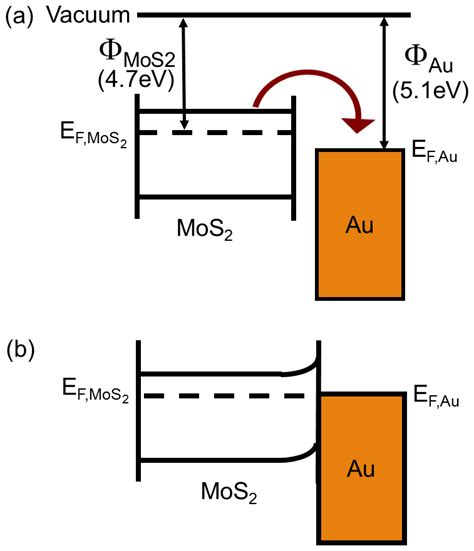 file diagram of band bending interfaces between two a the energy band diagram for mos2 and au shows the