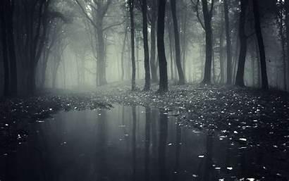 Forest Mist Creepy Nature Background Smoke Dark