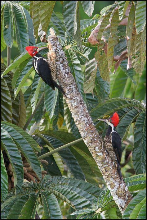 birds  ecuador favourite images
