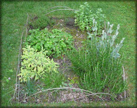 jeux de cuisine salade les plantes aromatiques ou herbes aromatiques une culture