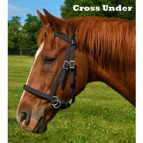 horse bitless bridle biothane beta bridles