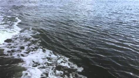 Boat R Galveston Tx by Dolphin Boat Galveston Tx
