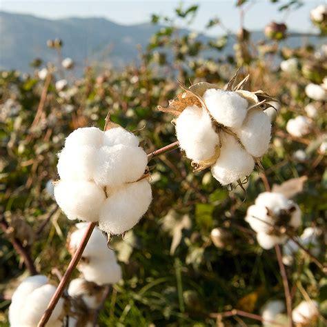 Organic Cotton  Trigema  100% Made In Germany