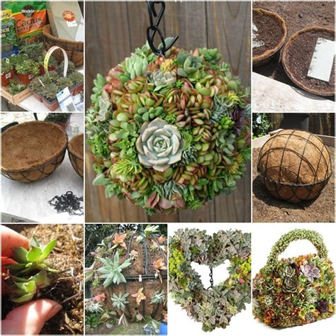 how to diy hanging succulent for your garden www
