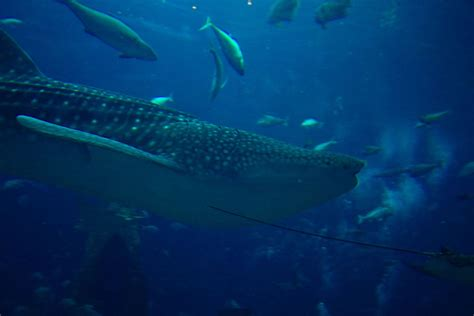 atlantis hotel aquarium dubai hotel atlantis dubai chambre aquarium wroc awski informator internetowy wroc aw wroclaw