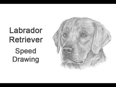 labrador retriever time lapse speed drawing preview