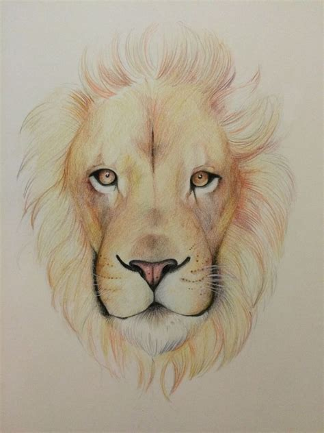 stunning collection  lion drawing design trends