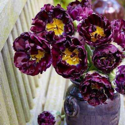 flower bulbs garden plants flowers  home depot