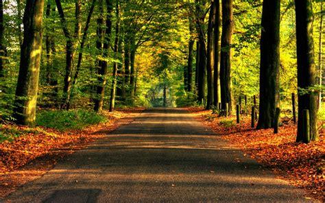 fondo camino en el bosque