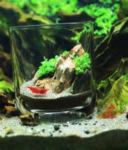 113 best images about hobbies aquascaping on aquarium decorations fish tanks and