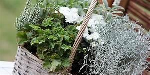 herbstbepflanzung fur den balkon balkonbepflanzung im herbst With französischer balkon mit immergrüne büsche für den garten