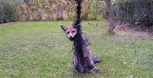 Vous Trouvez Un Animal Sauvage Bless Que Faire