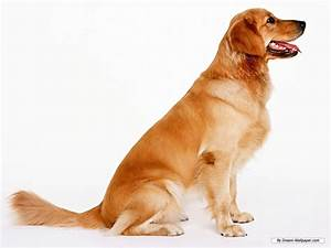 dogs wallpaper