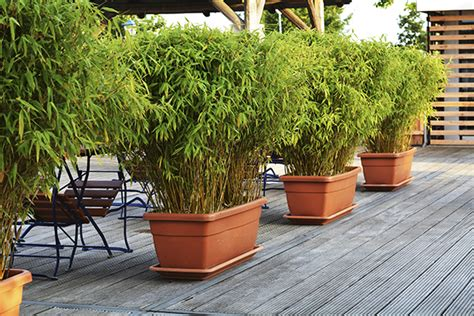 plants on patio plants for privacy schrader co