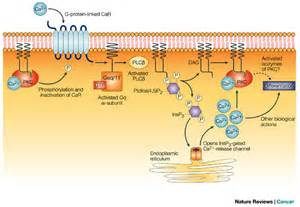 Figure 1 : Chemoprevention of colon cancer by calcium, vitamin D and ...  Colorectal Cancer Vitamin D