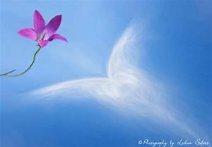 Engel Auf Wolke Schlafend : wolke mit einer blauen glockenblume fotos und bilder ~ Bigdaddyawards.com Haus und Dekorationen