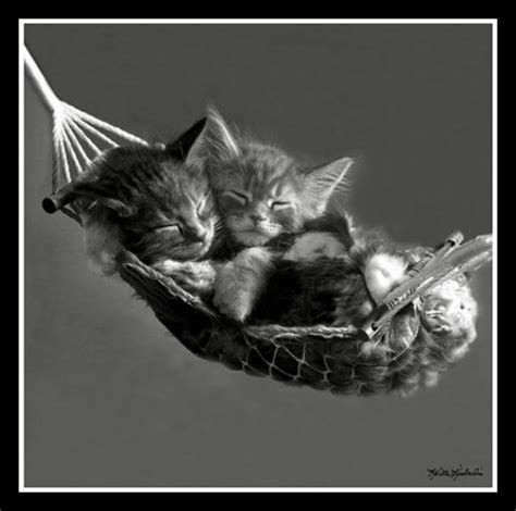 Kitten In A Hammock by 7 Cat Posters For Bedrooms Catster