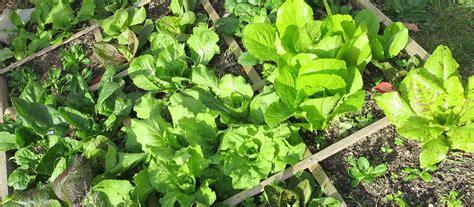 que planter dans potager quelles plantes vivaces pouvez vous planter dans le potager