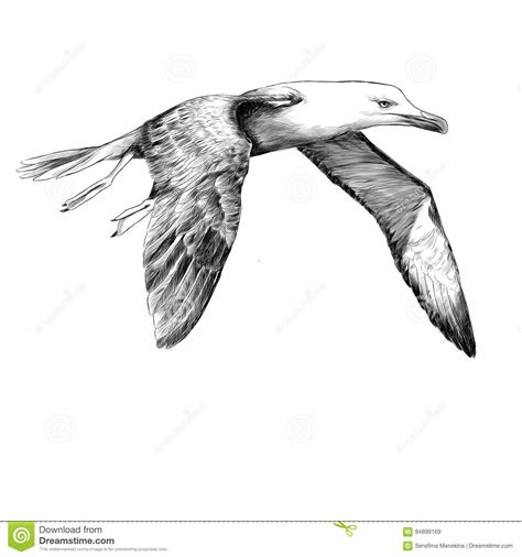 List Of Synonyms And Antonyms Of The Word Seagull Sketches