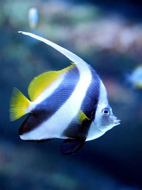 tropical fish identification