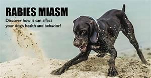 rabies miasm dogs
