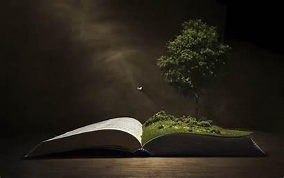 Background Tree Wallpapers Books Desktop Knowledge Laptop