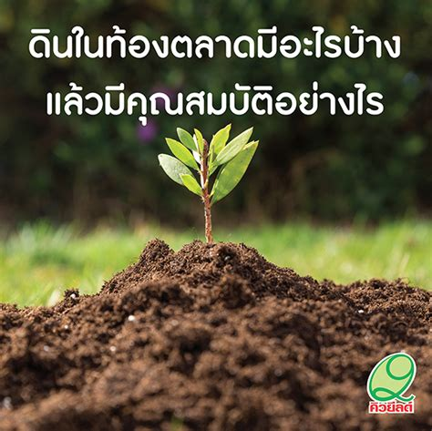 การปลูกพืชใช้ดินอะไรดี