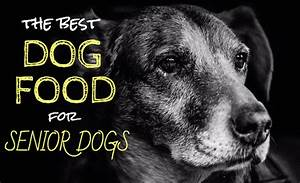 4 best dog food for senior dogs our top picks for older With best senior dog food