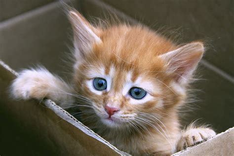 Top Boy And Girl Cat Names In Australia  Total Pets