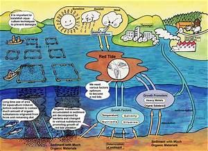Caloosahatchee River News