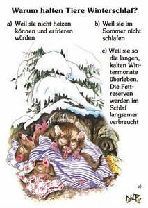 Halten Maulwürfe Winterschlaf : warum halten tiere winterschlaf din a4 quiztafel ~ Lizthompson.info Haus und Dekorationen