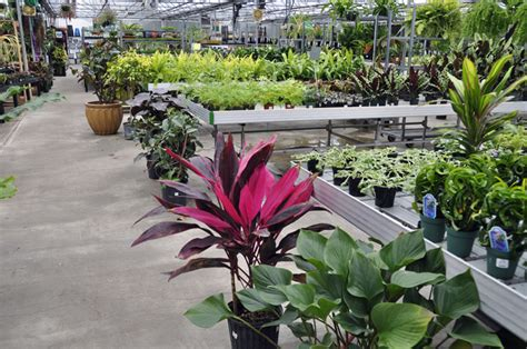 garden centers here garden a to z big box no name plants