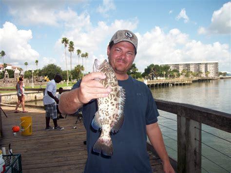 gag grouper smyrna causeway report south mud caught florida groupers same