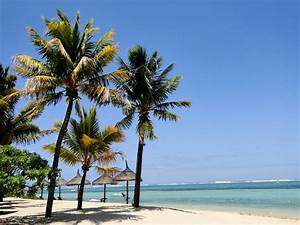 überwintern Von Palmen : palmen am strand von bel ombre mauritius foto bild ~ Michelbontemps.com Haus und Dekorationen