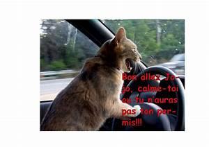 Mes Point Permis : j 39 ai eu mon permis de conduire ~ Maxctalentgroup.com Avis de Voitures