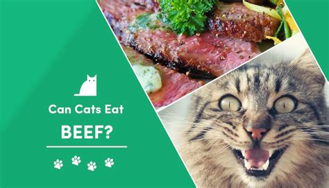 can cats eat beef jerky