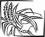 Grain Coloring Designlooter 517px 15kb sketch template