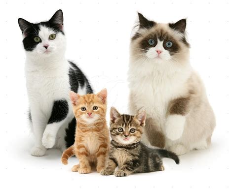 cat family cats family