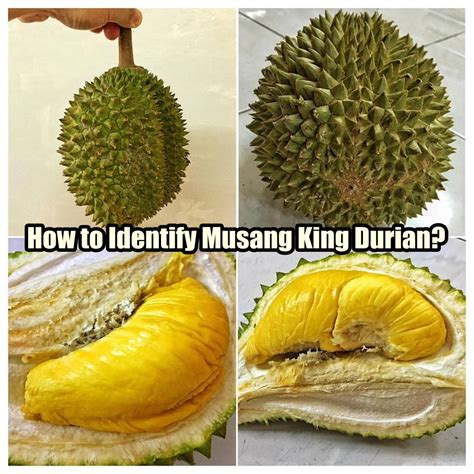 How To Identify Musang King Durian 猫山王榴莲?  I'm Saimatkong