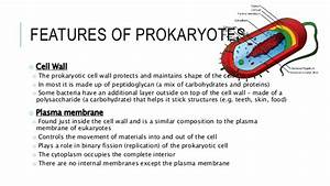 2  Prokaryotes And Their Structure