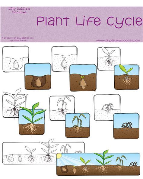 Plant Life Cycle Freebie  Classroom Freebies