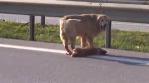 Video shows dog try to protect his friend after he is hit ...