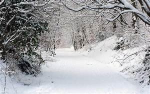 Snowy Forest Wallpaper - WallpaperSafari